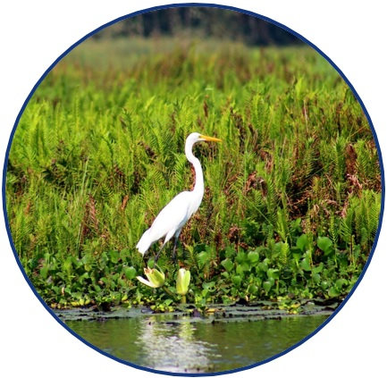 "Picture of a white crane near the edge of a body of water, surrounded by green grass and various other vegetation. The picture is a logo symbolizing the research theme of: ""Preserving the Environment""."